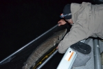 005-night-sturgeon-measuring